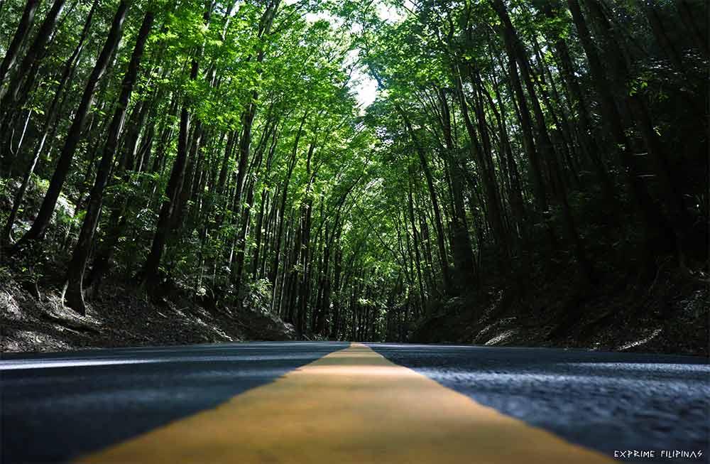 Man-made Forest, Bohol, Filipinas